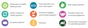 Positief effect op ecosystemen en biodiversiteit bij zonneparken